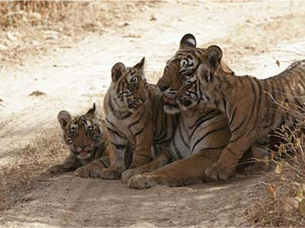 Maharajbagh Zoo